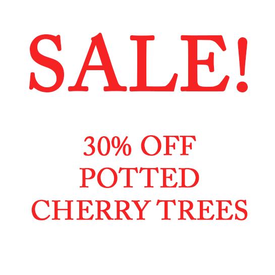 cherry_sale